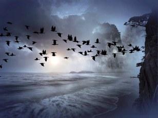 sciame-uccelli
