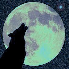 lupo ulula alla luna