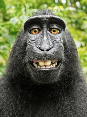 scimmia-ridens