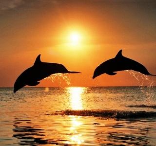 tramonto-delfini