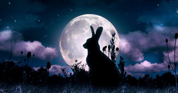 lepre-luna