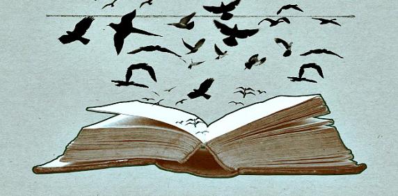 merli-libro
