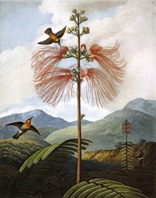 paesaggio-colombiano