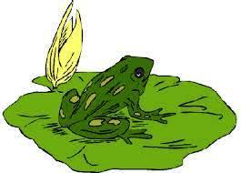 ranocchio-verde