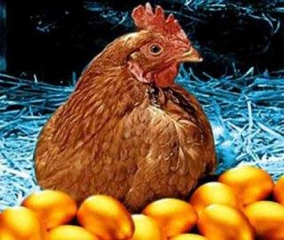 gallina-uova