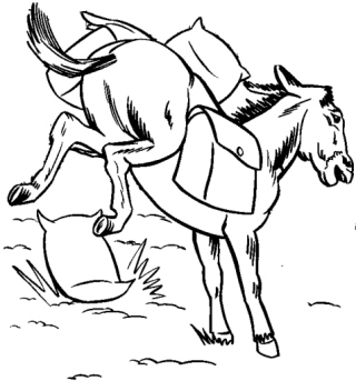 mulo-scalcia