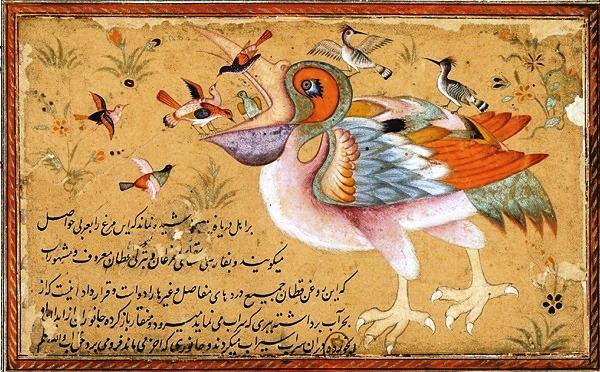 pellicano-arabo