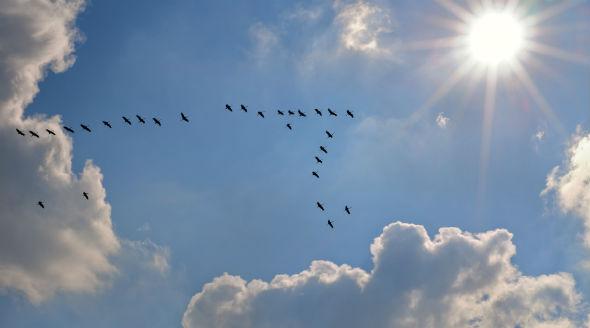 trenta-uccelli