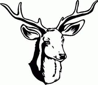 cervo-disegno