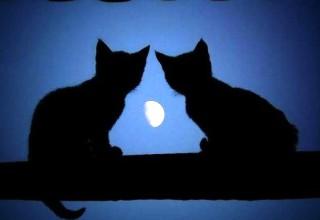 gatti-luna