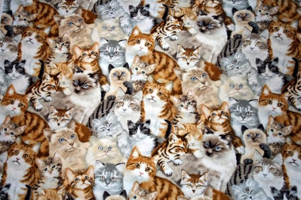 moltitudine-gatti