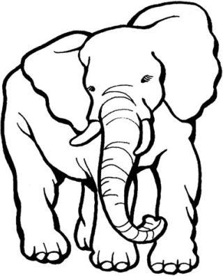 elefante-disegno