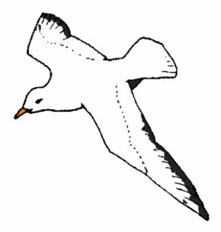 gabbiano-disegno