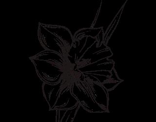 narciso-fiore-disegno
