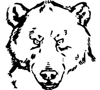 orso-faccia-disegno