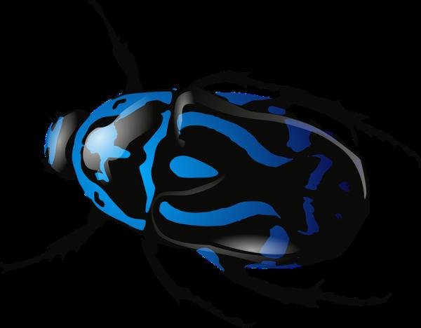 scarabeo-blu