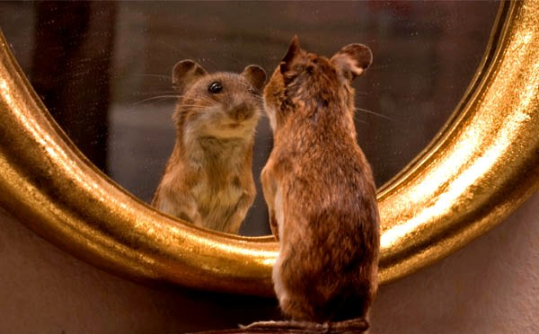 specchio-topo