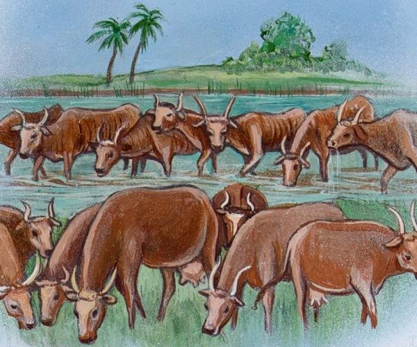 vacche-Faraone