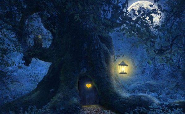 bosco-di-notte