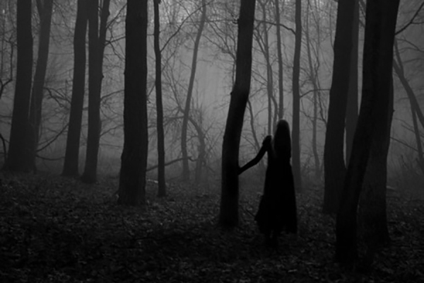 bosco-notturno