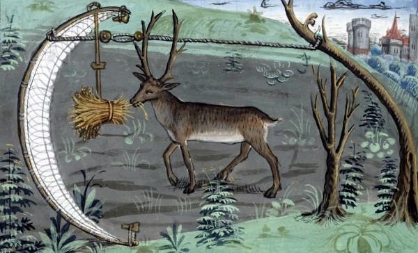 cervo-medievale