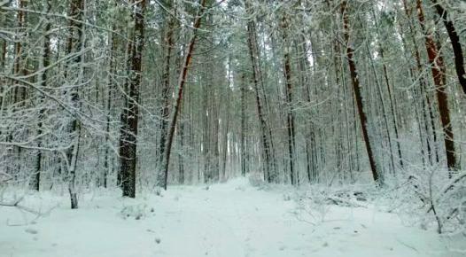 foresta-siberia