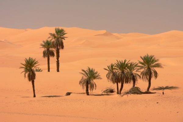 palma-deserto