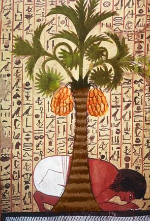 palma-egizia