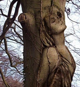 anima-albero