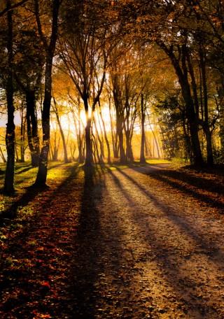 bosco-tramonto