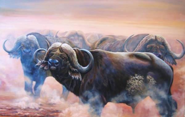 branco-bufali