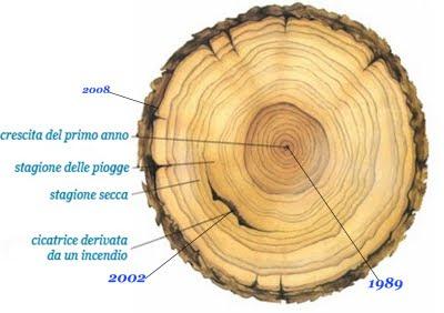 cerchi-albero
