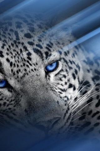 giaguaro-occhi