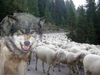 pecore-e-lupo