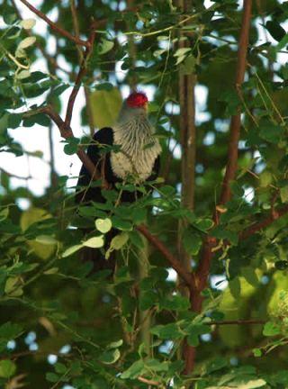 piccione-su-albero
