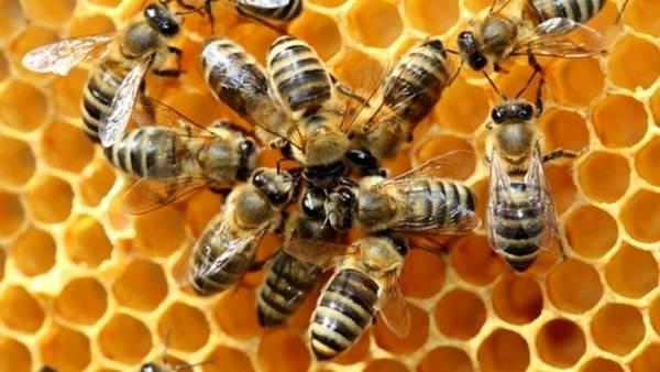 api-alveare