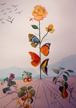 Dalì-farfalle