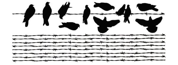 filo-spinato-uccelli