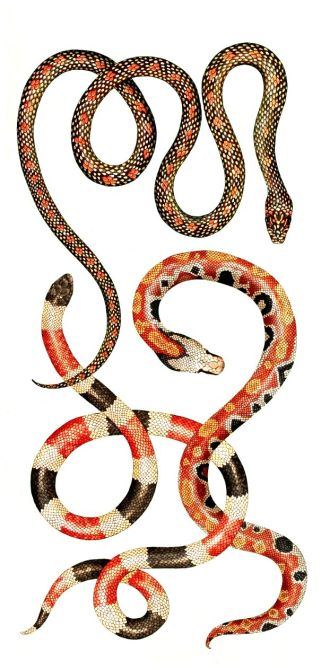 due-serpenti