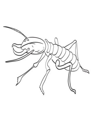 termite-disegno