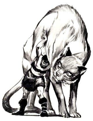 Thorr-gatto