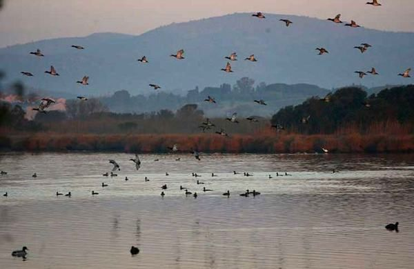 uccelli-oasi