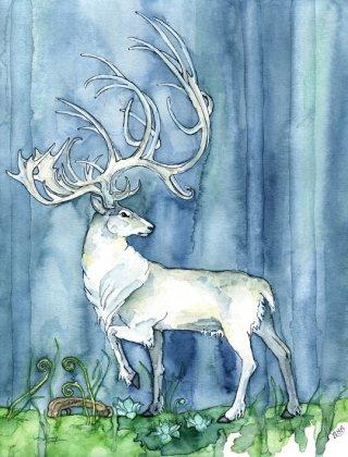 cervo-bianco