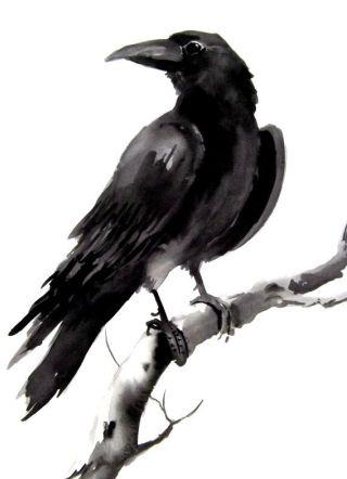 corvo-ramo