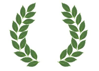 foglie-alloro
