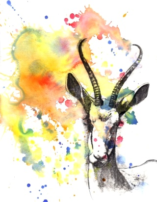 gazzella-paint