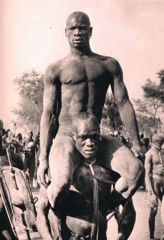 Kordofan-warriors