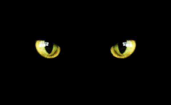occhi-gatto