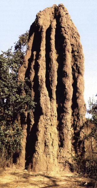 termitaio-giga