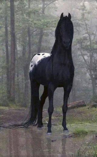 cavallo-nero